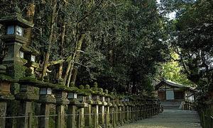 本殿から若宮神社に続く「御間道(おあいみち)」。石灯籠(いしどうろう)はこの道から建てられ始め、境内に広まったという=奈良市春日野町、伊藤菜々子撮影