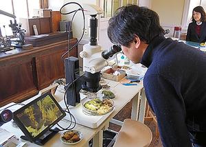 モニター付き顕微鏡でコケが鮮やかに=服部植物研究所