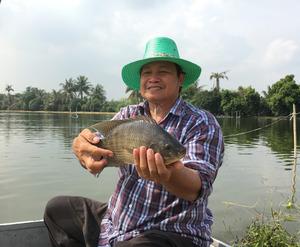 タイ中部サムットプラカーン県でティラピアを育てるスリヤン・プルアンスィさん(55)。養殖池は水田を掘ってつくった=2016年10月11日、乗京真知撮影