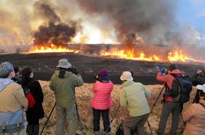 1500ヘクタールのヨシ原全体に炎が燃え広がり、空を焦がした=渡良瀬遊水地