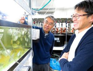 タイやティラピア、サンゴなど様々な水槽が並ぶ研究室はミニ水族館のよう。「昆虫を切り口に、養殖漁業を盛り上げていきたい」と語る三浦教授(左)と井戸客員准教授(右)=愛媛県愛南町