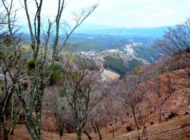 上千本の七曲から見た吉野山の桜。建物が連なる付近も吉野山