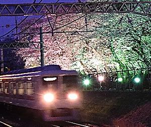 電車内から楽しむ夜桜