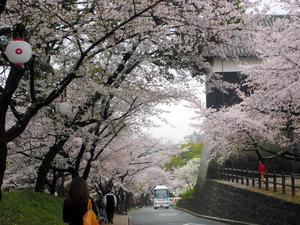 2015年春に撮影した行幸坂の様子=熊本城総合事務所提供