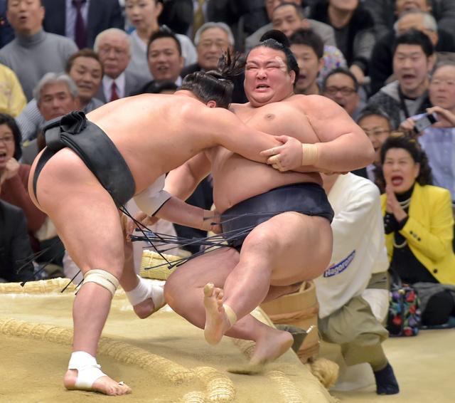 稀勢の里は寄り倒しで日馬富士に敗れる=外山鉄司撮影