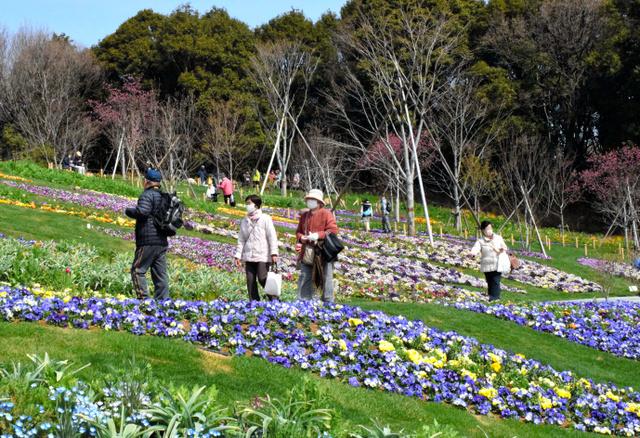 里山ガーデンの大花壇を散歩しながら、多くの来場者が花にカメラを向けていた=横浜市旭区