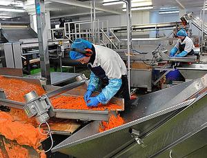 カット野菜製造「アルフレッド・G・ピアース」社のスティック状ニンジンの製造ラインで働くポーランド人(手前)とリトアニア人(奥)=2月、英東部キングスリン、渡辺志帆撮影