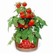 花や野菜の栽培キット、ファミマがプッシュ 顧客開拓に