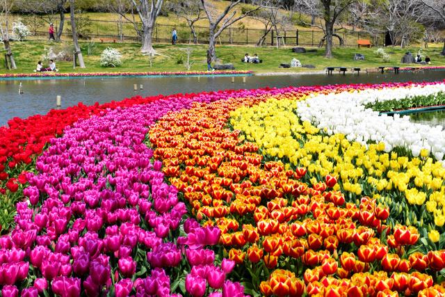チューリップで虹をイメージしたという=はままつフラワーパーク