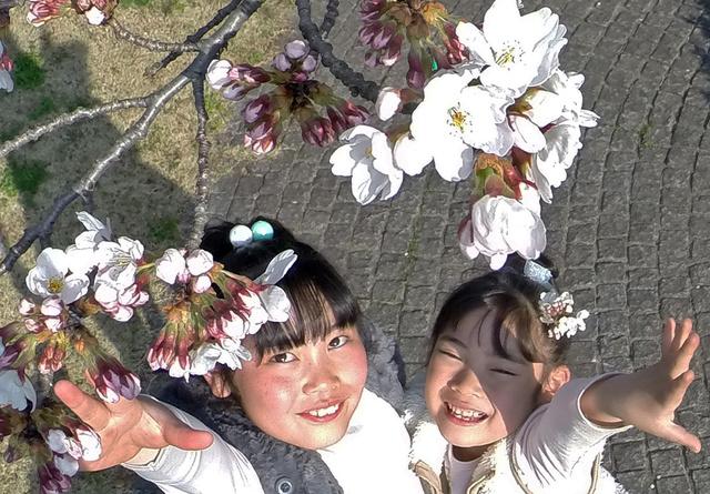開花したソメイヨシノに触れようと手を伸ばす姉妹=甲府市の小瀬スポーツ公園