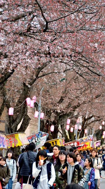 多くの人が訪れた六実桜まつり=松戸市六高台