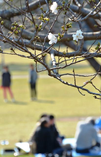 早くもお花見をしている人たちもいた=宮崎市船塚3丁目