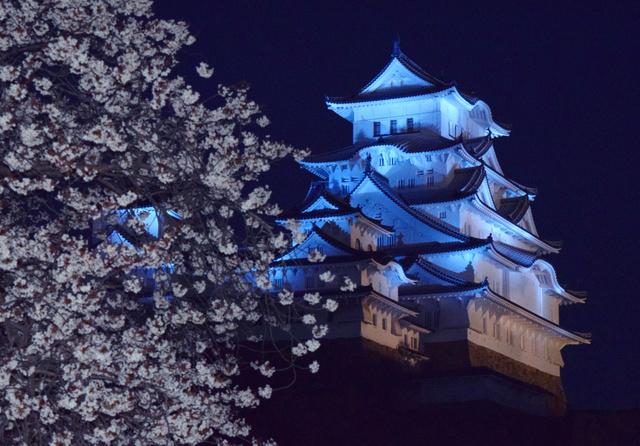 青色にライトアップされた姫路城大天守。西の丸庭園の桜も咲き始め、夜空に浮かび上がった=姫路市本町