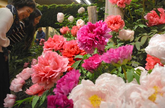 屋内庭園「牡丹の館」では一年中、350輪以上が咲き誇る=松江市八束町波入