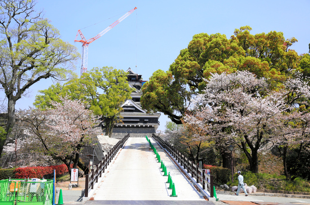天守閣を正面に望む場所に作られた工事で使う重機などを通すスロープ。周囲ではまだ桜が咲いていた=13日午後1時32分、熊本市中央区、西畑志朗撮影