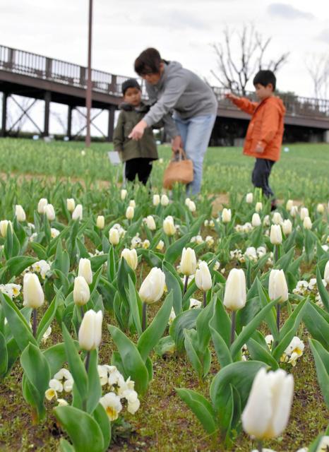 新潟ふるさと村では子連れの家族らがチューリップをめでていた=15日、新潟市西区