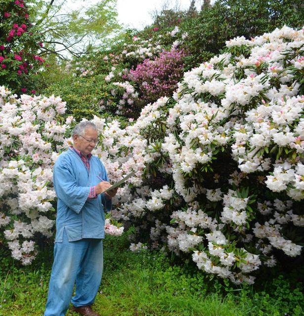咲き誇るシャクナゲをスケッチする鬼源丹さん=三股町長田