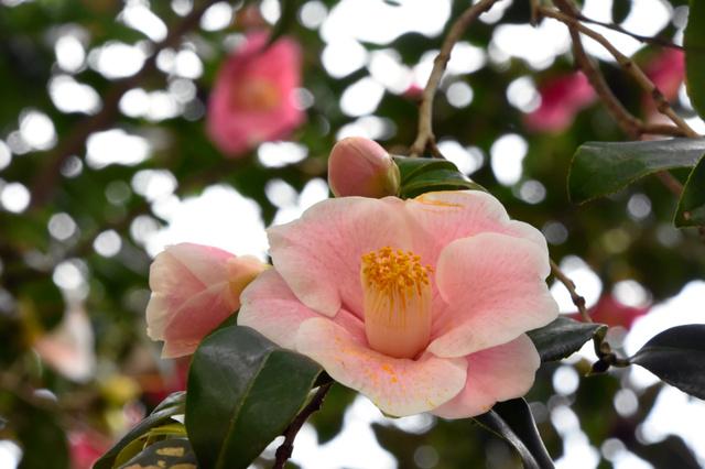 一本の木にピンクや赤など色とりどりの花が咲いている=津市芸濃町河内