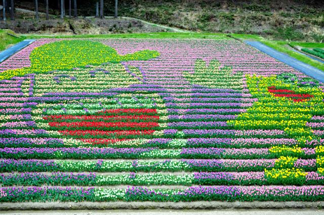 10万本のチューリップで描かれたキャラクター=豊岡市但東町畑山