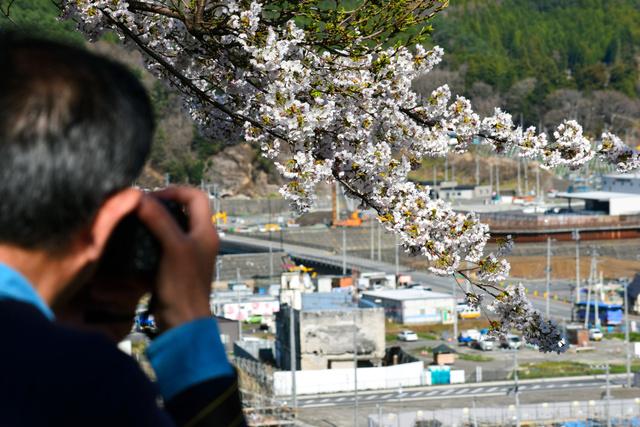 旧役場庁舎と桜を絡めて撮影する男性=大槌町