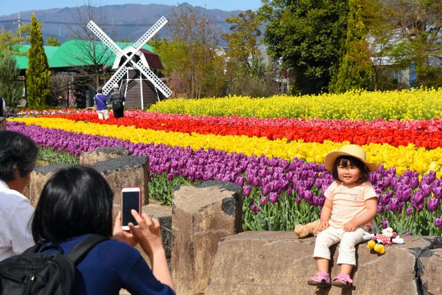 色とりどりのチューリップを背に写真を撮る人も=甲州市勝沼町等々力のハーブ庭園旅日記