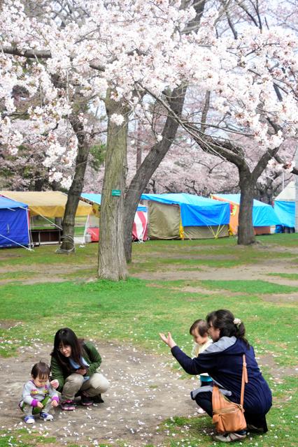 桜の木の下で花びらを集めて遊ぶ子ども=青森市の合浦公園