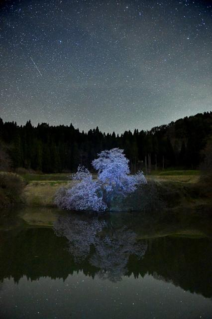 満開を迎えたオオヤマザクラ。水面に星も映りこんだ=24日夜、福島県喜多方市山都町、長時間露光、福留庸友撮影