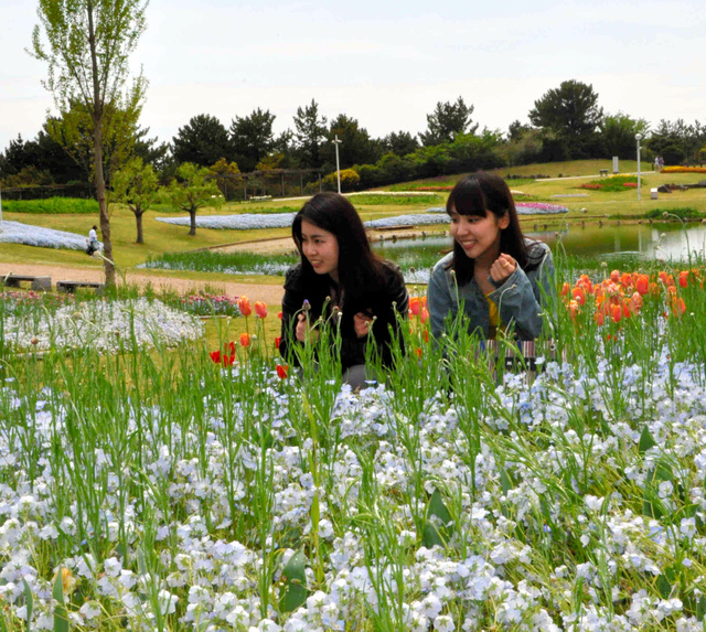 ブルーの花のネモフィラなどを眺める観光客=淡路島国営明石海峡公園