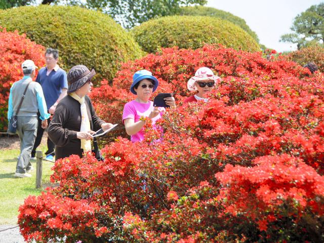 ツツジの写真を撮る人たち=水戸市の偕楽園