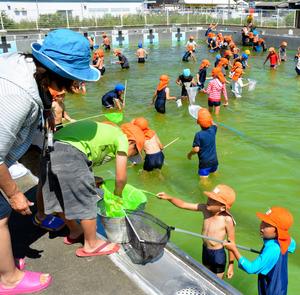 プールの中でヤゴを探す子どもたち=西都市三宅