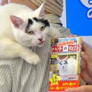 幸運呼ぶ?困り顔の看板猫 「ハチ」が本になる 茨城