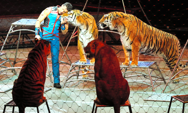 最後のショーで、トラを抱きしめるサーカスの調教師=AP
