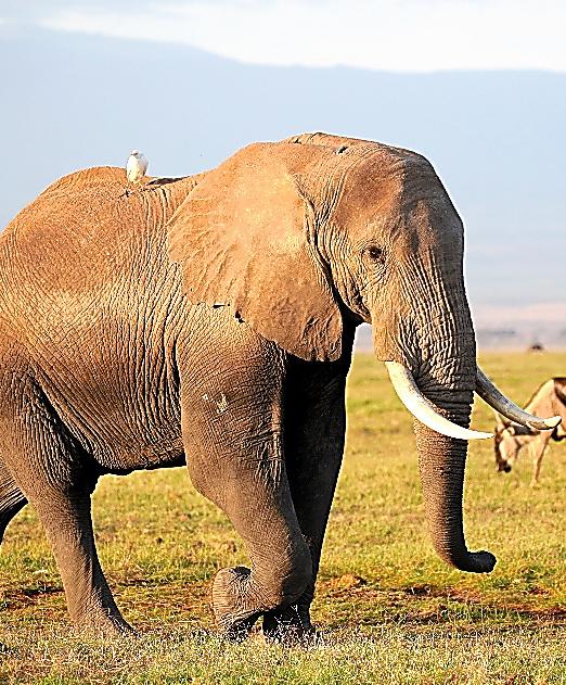 ゾウの密猟と戦う人々