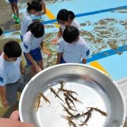 学校のプール、水を抜いたら…大量の希少サンショウウオ