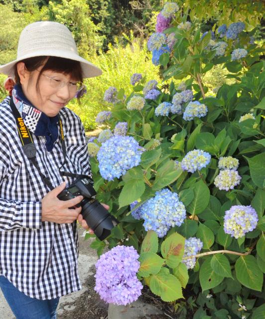 淡い紫色や水色の花を咲かせたアジサイ=洲本市千草戊
