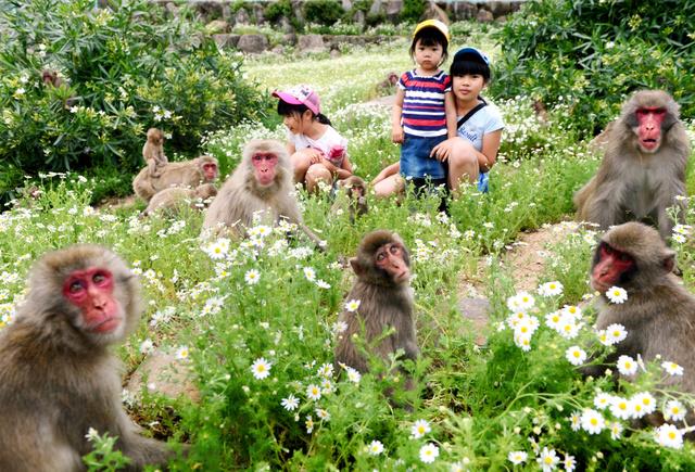 カモミールを楽しむ子どもたちと猿=土庄町