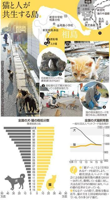 猫と人が共生する島/全国の犬・猫の殺処分数/全国の犬猫飼育数