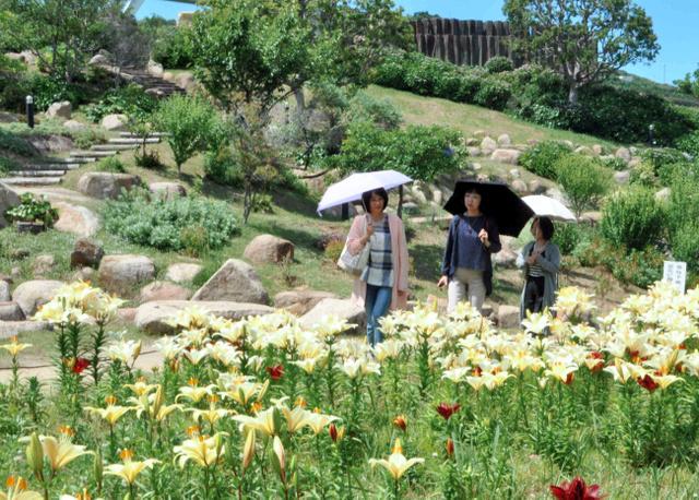 国営明石海峡公園でユリの花を楽しむ来園者=淡路市夢舞台