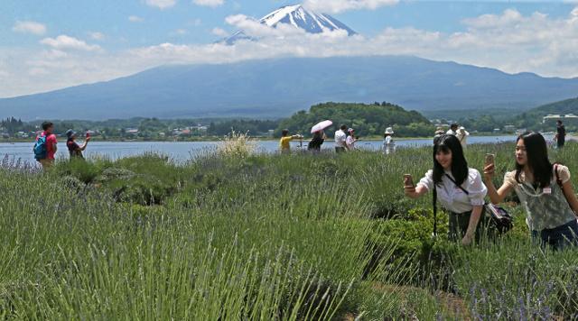 ラベンダー畑の散策を楽しむ観光客=富士河口湖町大石
