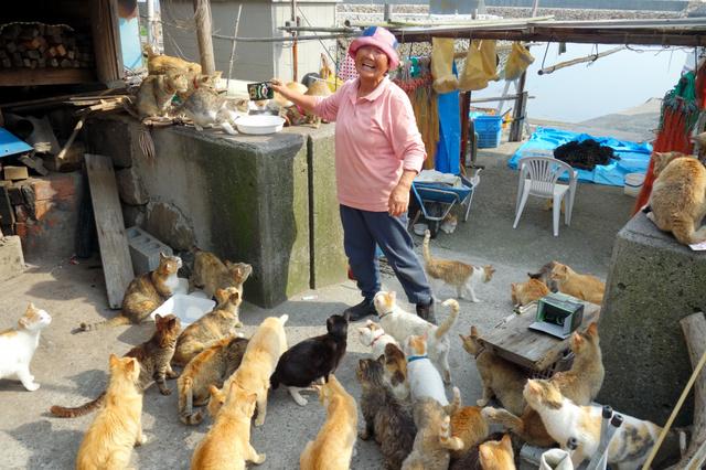 島の猫たちにエサをあげる紙本直子さん=5月30日、愛媛県大洲市青島、吉川啓一郎撮影