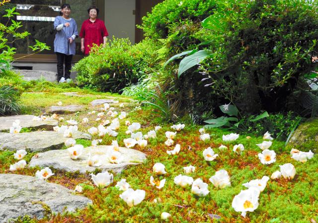 境内に散った沙羅の花=福崎町高岡
