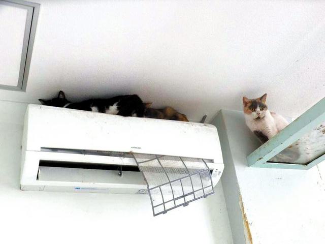 猫カフェの店内に放置されていた猫(鹿児島市、犬猫と共生できる社会をめざす会鹿児島提供)