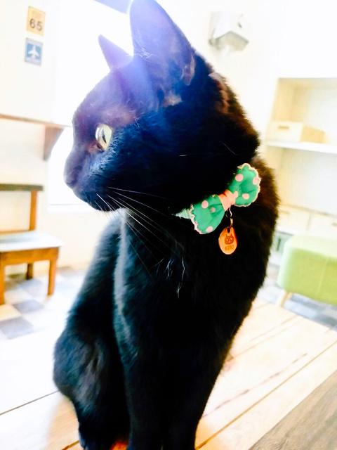 店長の黒猫「くろ」=米子市皆生温泉4丁目、「NEKO CAFE Kuro」提供