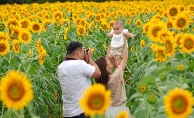 ヒマワリ畑で撮影を楽しむ親子=由利本荘市西目町沼田