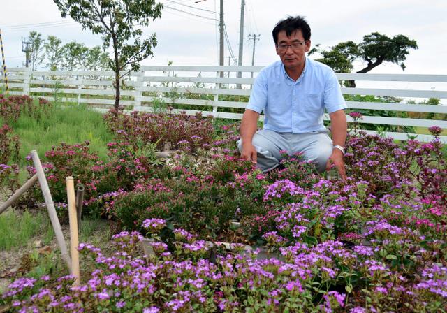 NPOの事務所敷地で咲き誇るハマナデシコを見つめる菅原信治さん。「多様な植生を次世代に残したい」=気仙沼市波路上