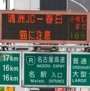 名古屋高速は「ネコ注意!」 事故多発、どこから侵入?