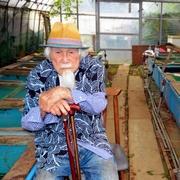 緑色の金魚、97歳「仙人」が繁殖成功 決意から40年