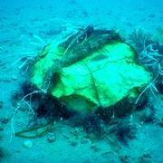 海底に特攻艇「震洋」のエンジンか 千葉・館山沖に残骸