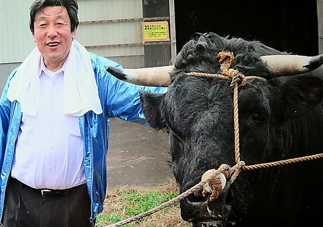 衆院議員転身後、自ら飼う闘牛「三太夫」と。震災時、1200頭の牛が山古志からヘリコプターで避難した=長島事務所提供