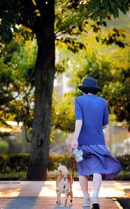 セミ時雨の中、近くの公園を老犬ハッピーと散歩する秋山節子さん=2004年7月